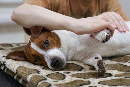 Weißt du wie du deinem Hund eine Massage gibst?