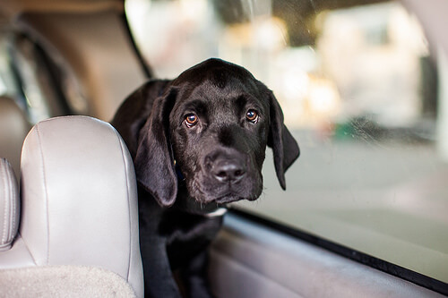 Autoreise mit Hund: Tipps und Tricks