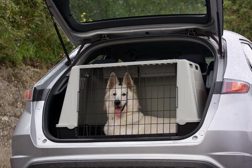 Autoreise mit großem Hund