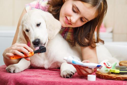 Mundhygiene - Zähneputzen beim Hund