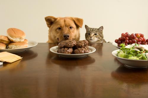 Dein Haustier ist kein Mensch, du quälst es, wenn du seine Natur nicht respektierst