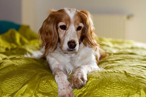 Warum schnüffeln Hunde am Intimbereich?