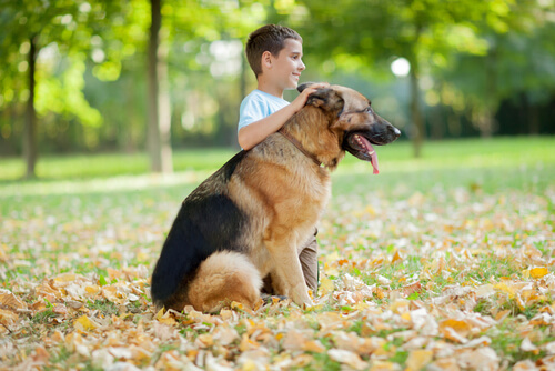 Die anhänglichsten Hunderassen