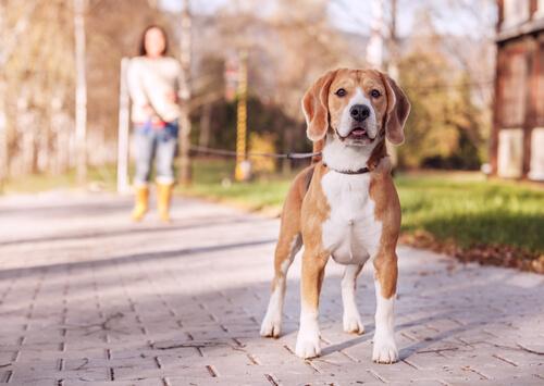 Zeige deinem Hund beim Spazieren, dass er dich respektieren soll