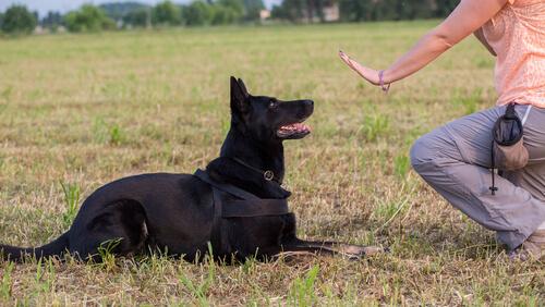 Wie zeige ich meinem Hund, mich zu respektieren?