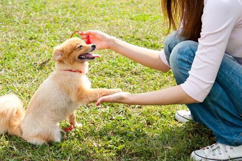 Krebs bei Hund vermeiden