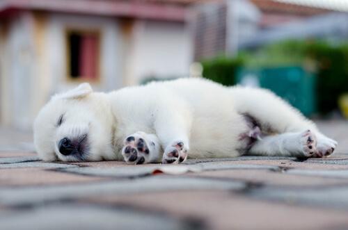Wie schläft mein Hund