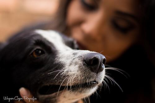 Die Humanisierung von Hunden liegt oft darin begründet, dass Menschen zu anderen Menschen kein Vertrauen fassen.