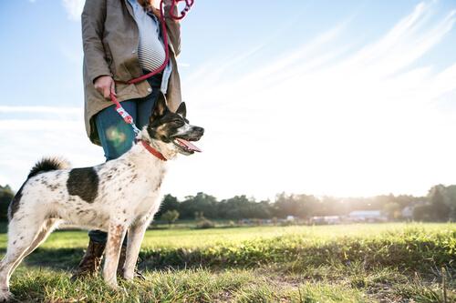 Eine frühe Erziehung beugt der Humanisierung von Hunden vor.