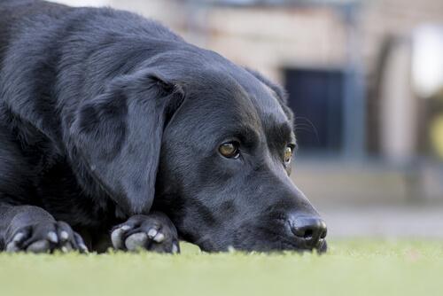 Krankheiten bei alten Hunden und ihre Behandlung