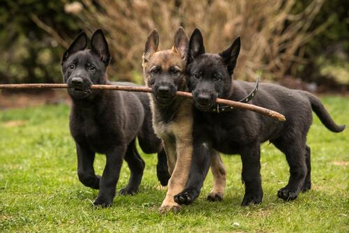 8 liebevolle Hunderassen