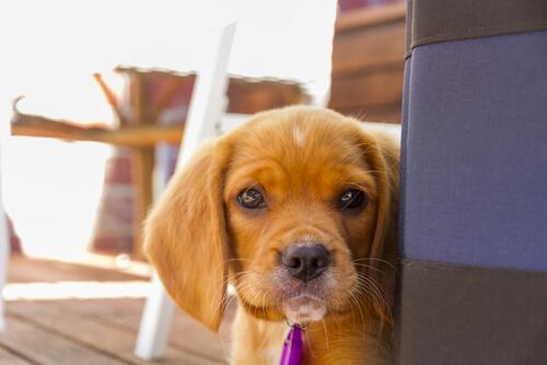 10 Dinge die du vermeiden solltest, wenn du deinen Hund respektierst