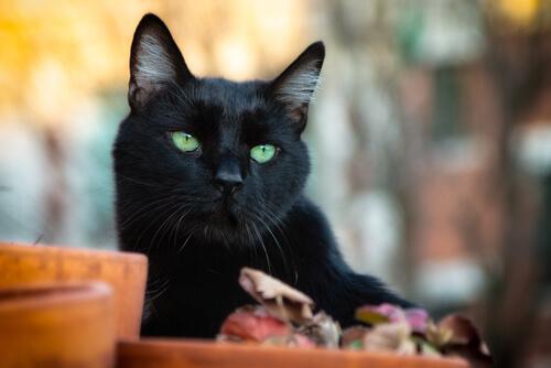 Schwarze Katzen: Glück oder Unglück?