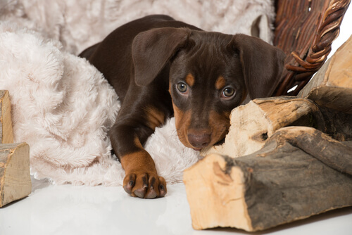 Wie kann ein Hund die Trauer um ein anderes Haustier überwinden?