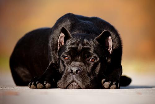 Hund leidet durch Trauer