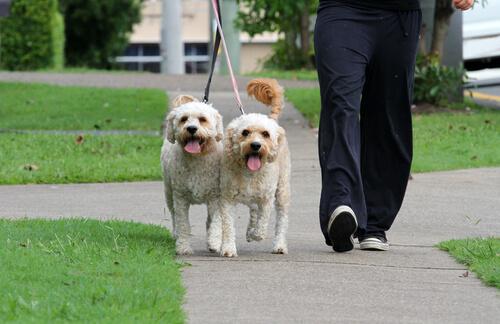 zwei Hunde beim Gassigehen