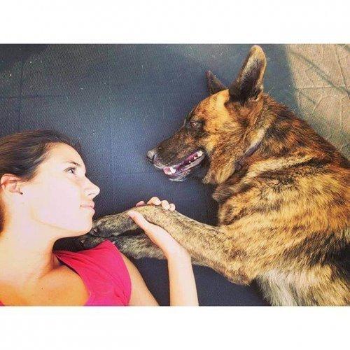Anaphylaxie und die Folgen beim Hund