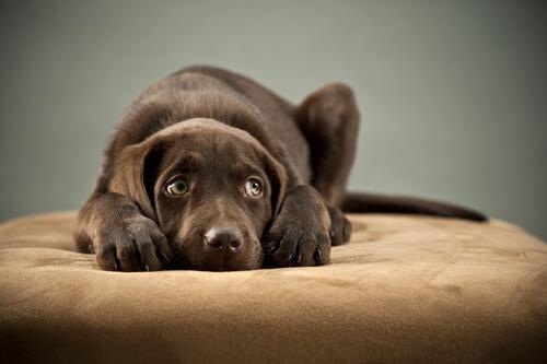 Angstverhalten eines Hundes