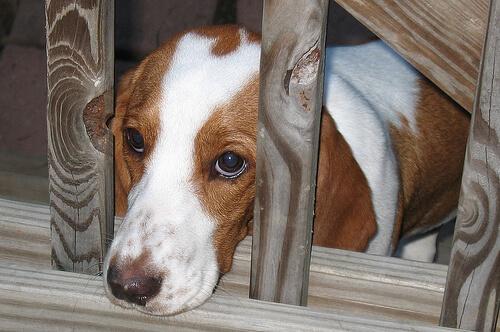 Angstverhalten bei Hunden