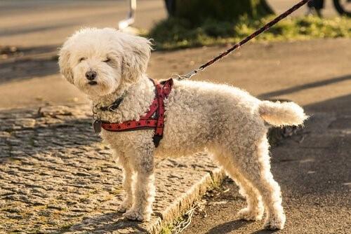 Das Hundegeschirr - Hund an Leine