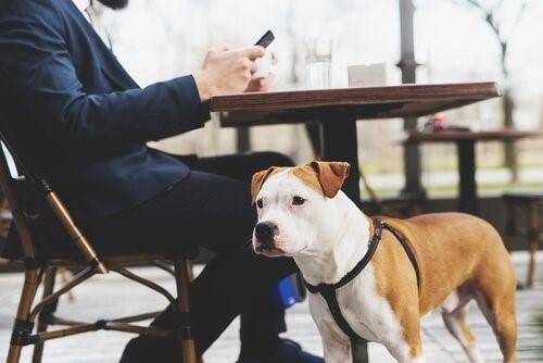 Das Hundegeschirr - Hund im Cafe