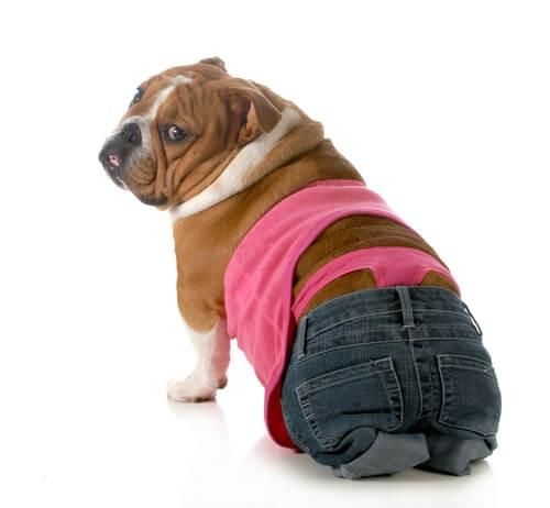 Die läufige Hündin - Hund in Jeans