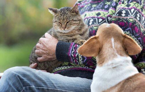 Eifersucht zwischen Hund und Katze