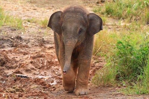 Frau rettet und adoptiert Elefantenbaby