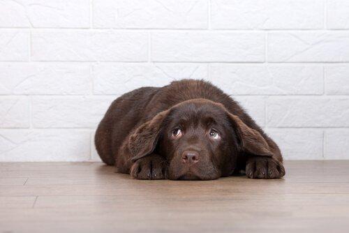 6 Gründe, warum du deinen Hund nicht bestrafen solltest
