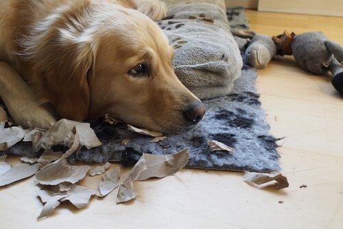 Tipps, um deinen Hund ans Alleinsein zu gewöhnen
