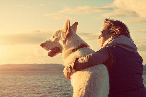 Hunde bestrafen wirkt sich auf Beziehung aus