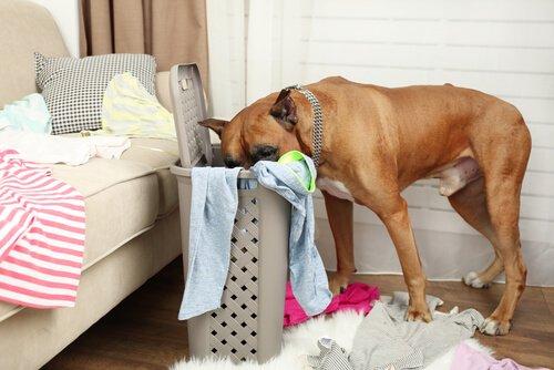 Hunde leiden unter dem Alleinsein
