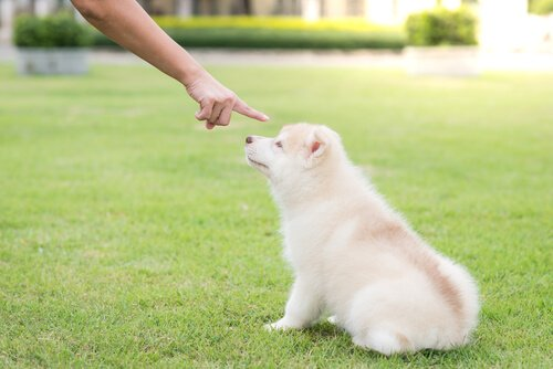 Strafen für Hunde?