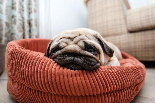 Hunde schlafen in ihrem Bettchen