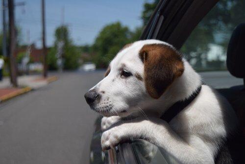 Hundediebstahl verhindern – 10 Tipps für Hundehalter