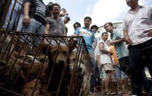 Hundefleisch-Festival in China
