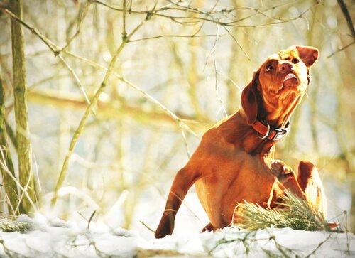 Hundekrankheiten durch Parasiten verursacht