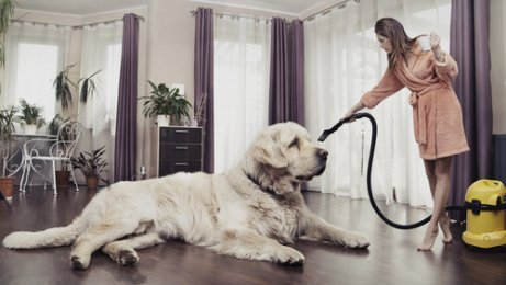 Sauberes Haus - trotz Haustier!