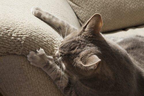 Was tun, wenn die Katze alles zerkratzt?