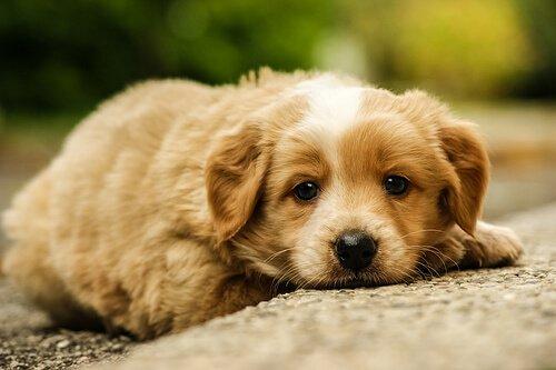 Wie geht man mit einem misshandelten Hund um?