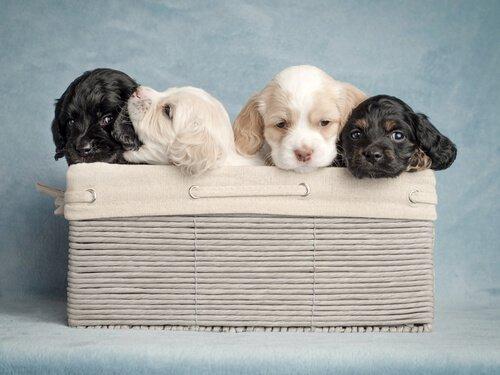 Wie wähle ich den besten Hundenamen?