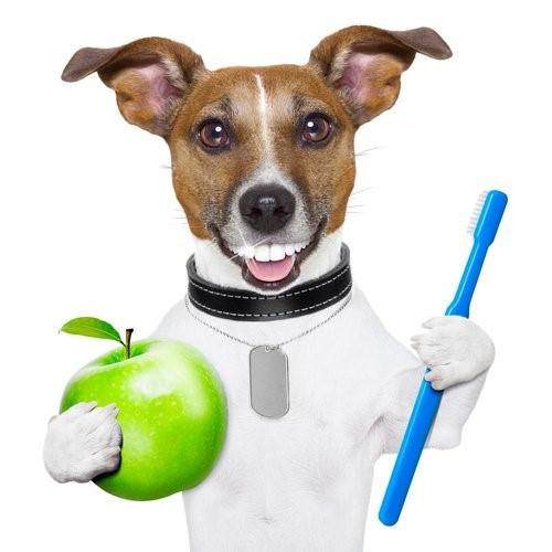 Zahnpflege bei Hunden - Hund mit Zahnbürste und Apfel