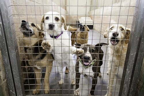 Zeuge von Tierquälerei - Hunde im Tierheim