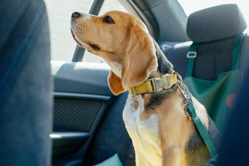 sichere Autofahrt mit Hund