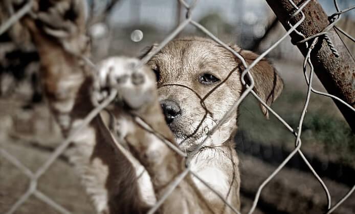 einen misshandelten Hund aus dem Tierheim aufnehmen