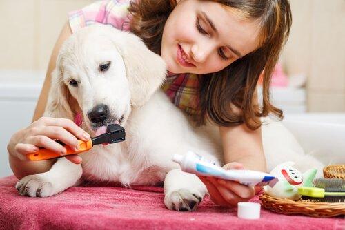 Frau entfernt Zahnstein bei Hund