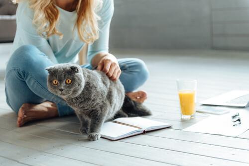 Frau mit Katze auf dem Boden weiß, dass Katze spricht