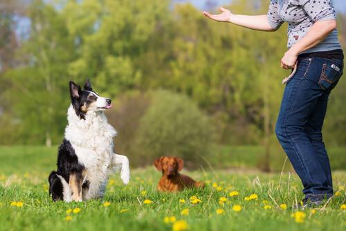 Grundlegendes Gehorsamstraining für Hunde