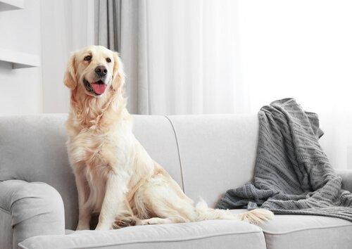 großen Hund im Haus haben