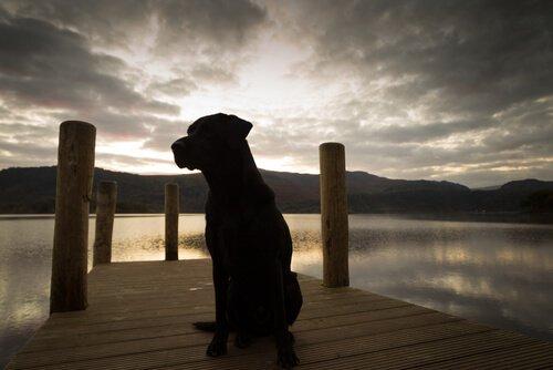 Hund am Abend vor See